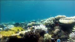 La Grande barrière de corail en péril
