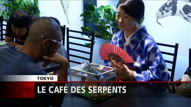 Petit café en tête-à-tête avec un serpent