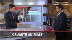 TJ Midi : entrevue avec Dr Joël Bergeron, président de l'Ordre des médecins vétérinaires du Québec