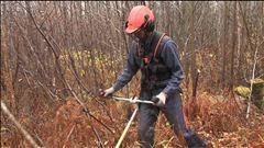 Villages forestiers : de nouvelles avenues explorées