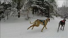 Un sport qui a du chien