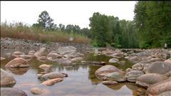 Sécheresse : les saumons de la rivière Seymour en péril
