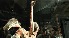 L'exposition Animaux à corps ouvert
