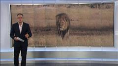 Mort de Cecil : des accusations criminelles?