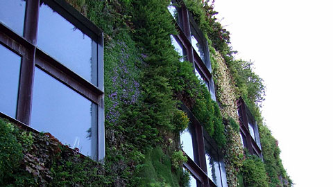 apr s les toits verts les jardins verticaux ont la cote vancouver macadam tribus ici. Black Bedroom Furniture Sets. Home Design Ideas