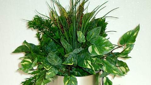 Plantes d 39 int rieur purifiantes l 39 apr s midi porte for Porte plantes dinterieur