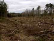 forêt rasée