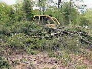 foret biomasse