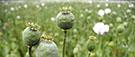 L'opium et le peuple, unehistoire de racisme