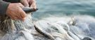10 millions de tonnes de poissons rejetées à l'eau chaque année