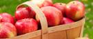 Le plaisir de l'autocueillette de pommes et de poires