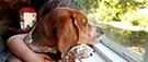 Sortir en public avec son chien, encore un casse-tête au Québec