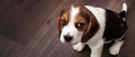 Cinq choses à savoir pour adopter un animal