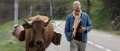 La vache , un film qui fait du bien
