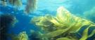 Comment les algues ont transformé la vie sur Terre
