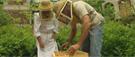 Les ruches urbaines enplein essor àVancouver
